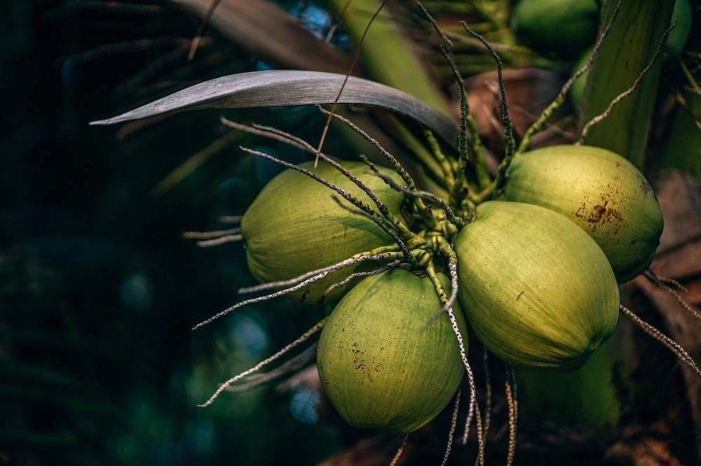 नारियल पानी के नुकसान
